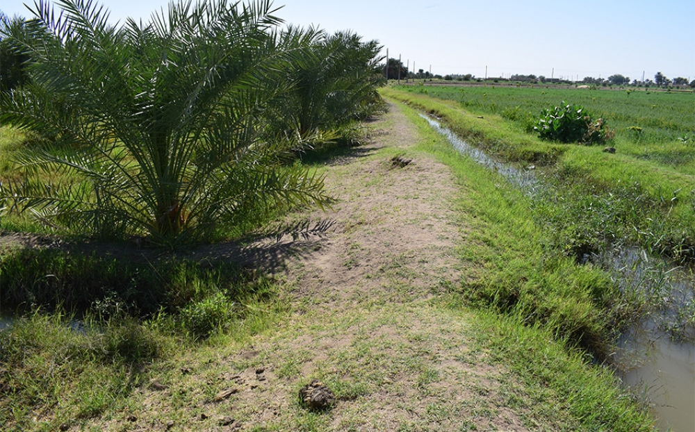 Date Palm Production and Socio-Economic Changes Along the Nile in Northern Sudan