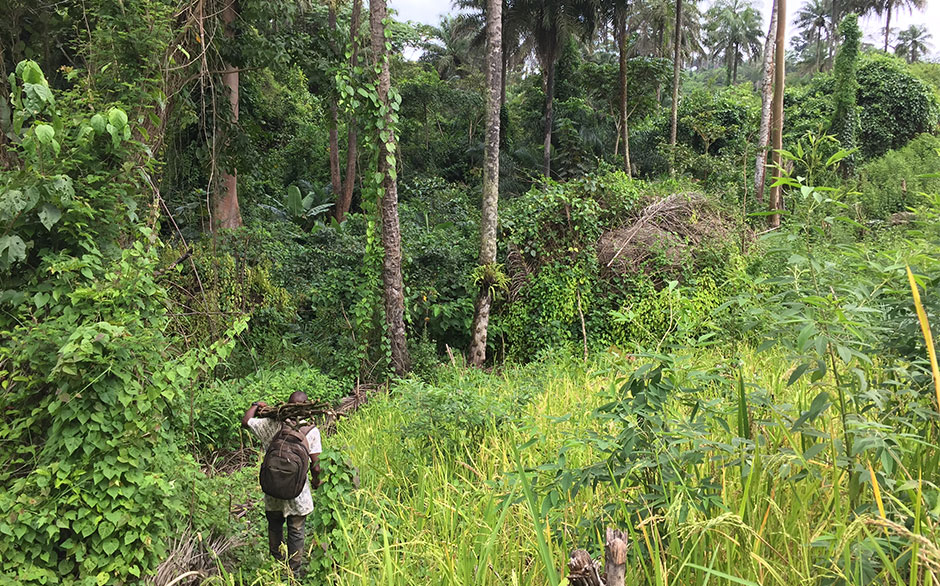 Translations of Care in Changing Ecologies of Human-Forest-Relations in Sierra Leone